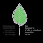 logo - FESTIWAL