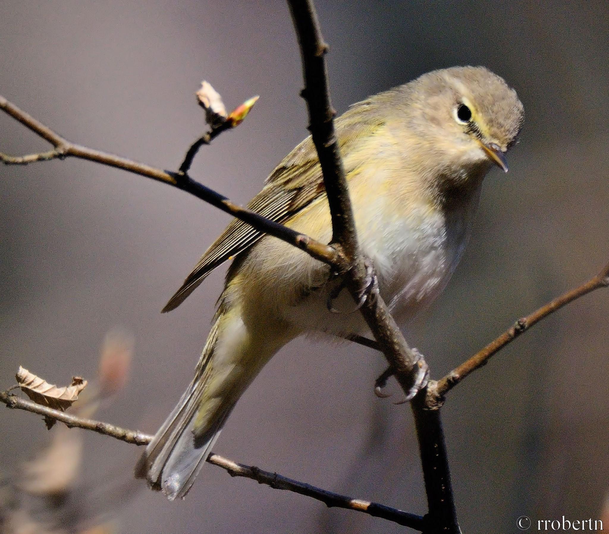 Gdzie I Jak Szukać Wiosną Ptaków W Mieście Ptasia Akademia
